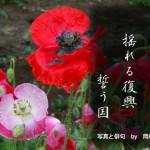 ケシの花、「芥子の花揺れる復興誓う国:岡村行雄」